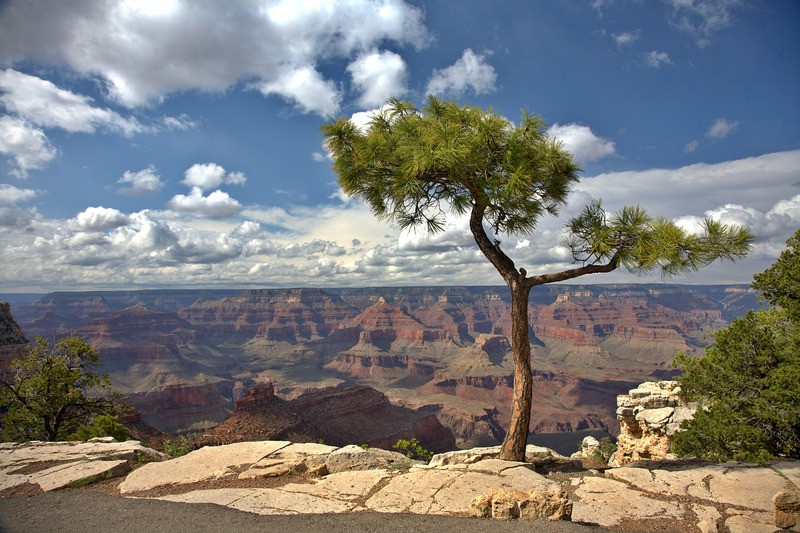 Tuinposter 'Grand Canyon met boom'